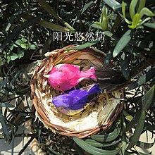 草編鳥窩 鳥巢 花院裝飾