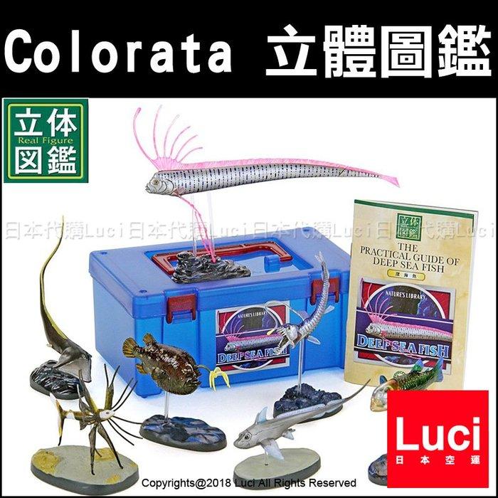 深海魚 Colorata 立體圖鑑 展示 教學模型 魚類生態 生物科學 仿真 玩具模型 LUCI日本代購