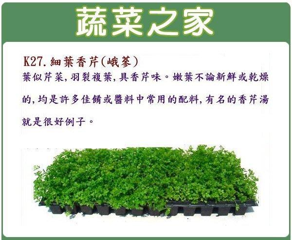 【蔬菜之家】K27.細葉香芹種子(峨蔘)1200顆(葉似芹菜,羽裂複葉,具香芹味。嫩葉均是許多佳餚常用的配料.香草種子)