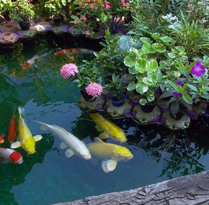 浮盆 魚缸種花種菜 魚菜共生 水耕植物多肉植物水族箱園藝花盆種有機蔬菜 魚池水池 花園造景水草水上葉人工浮島景觀 半水景