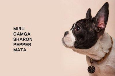 Puppy Idol 帕彼愛逗 韓國 ONE OF US 帥氣編織頸圈 黃色 [A1696]