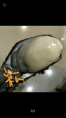 2019年澎湖講美帶殼牡蠣 帶殼鮮蚵開賣囉!20斤下標專區!!自家養殖 超鮮甜 吃過都說讚唷!!