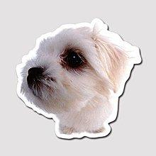 【SPSP】瑪爾濟斯 馬爾濟斯 寵物 3M貼紙 防水貼紙 疤痕貼紙 機車貼紙 汽車貼紙 旅行箱貼紙 動物貼紙 車身貼紙