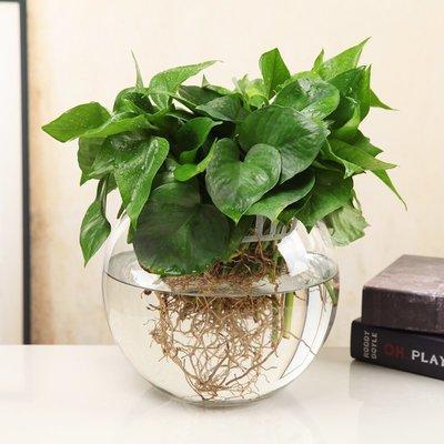 歐式花瓶玻璃水培植物花瓶花盆透明辦公室養花綠蘿富貴竹水養魚缸器皿容器