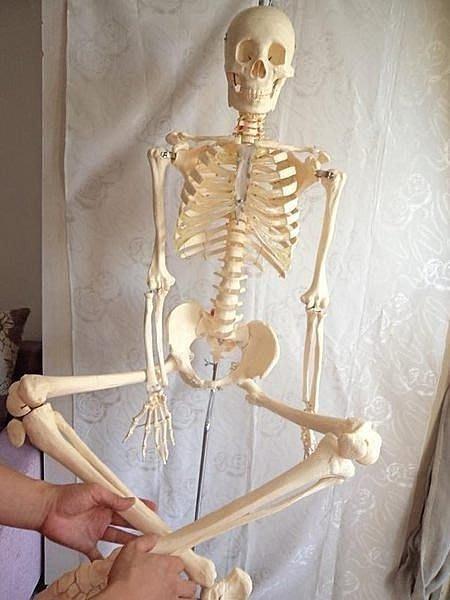 【優上精品】一比一比例人體骨骼模型170CM 人體模型 人骨架醫學教具標本模(Z-P3281)