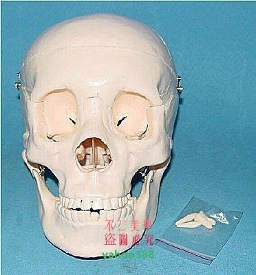 美學187大頭骨醫用教學模型,人體頭骨...