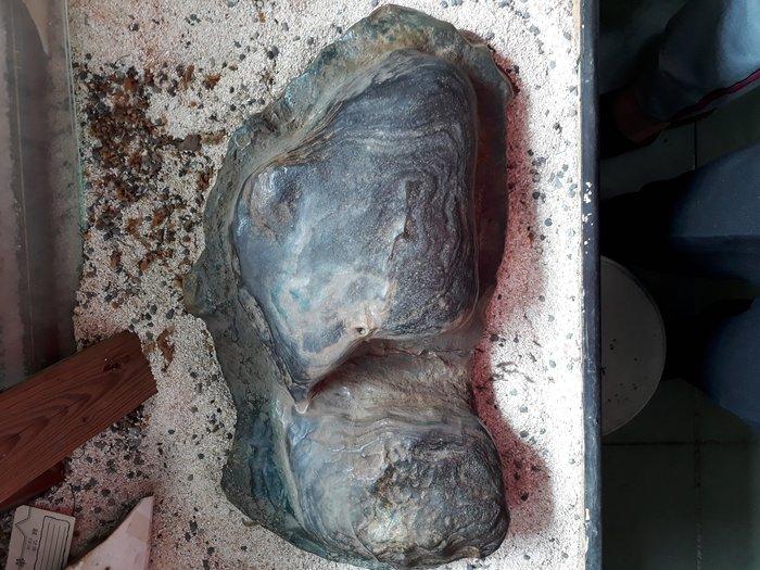 綠彩陶石,重17.5公斤,長43公分 寬26公分高10公分.
