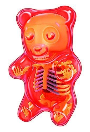 Gummy Bear Anatomy Gummi 解剖小熊軟糖 Jason Freeny
