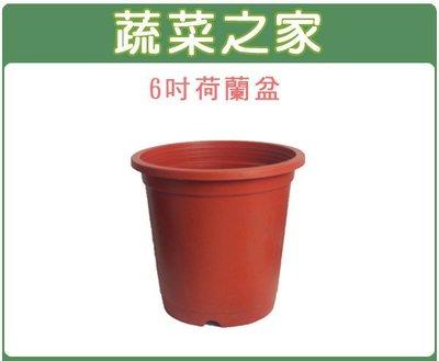 全館滿799免運【蔬菜之家005-C4...