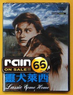 ⊕Rain65⊕正版DVD【靈犬萊西(1943)/Lassie Come Home】-伊莉莎白泰勒-全新未拆(直購價)