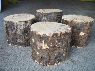 【虫話森林】優質國產A+級產卵木【XL】(甲蟲,鍬形蟲、昆蟲、獨角仙)