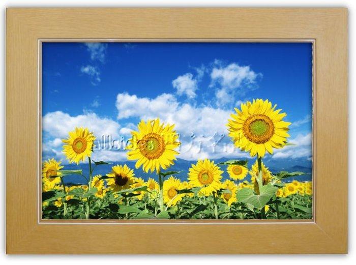 四方名畫: 太陽花向日葵013 C尺寸  含實木框/厚無框畫 畫質細緻 裝飾畫MIT可訂製尺寸