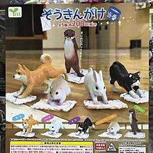全新 正版 日版  抹地動物 清潔值班動物 全5種 扭蛋 現貨 倉鼠 白兔仔 柴犬 秋田犬 喵星人