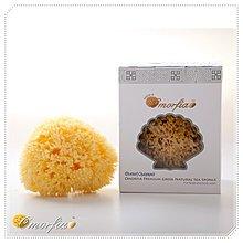 Omorfia 歐摩菲亞洗顏用希臘天然海綿 [海綿之王] 蜂巢 3-3.5吋
