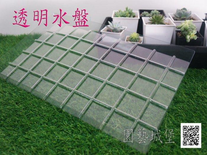 【園藝城堡】透明水盤 育苗盤專用 居家園藝
