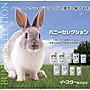 日本 Yeaster 愛情物語 Bunny Selection BS 肥胖兔用飼料1.3kg-紫(超取最多3包)