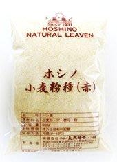 星野酵母 赤種 紅種 天然小麥酵母 50g 分裝 *水蘋果* N-143
