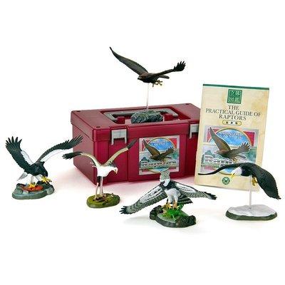 正版 立體圖鑑擬真模型BOX 猛禽類 5種組 小模型 小公仔 日本代購