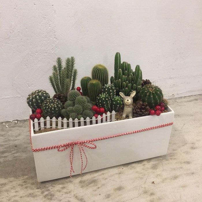 T26。仙人掌桌上型盆栽。台北歡迎自取【Flower&House花藝之家】