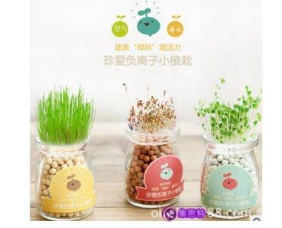 迷你園藝室內小盆栽創意禮品/生態瓶辦公室小盆栽多肉植物/創意禮物集思特(0328-5)