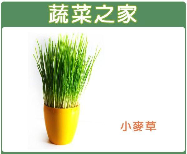 【蔬菜之家】J04.小麥草(貓草)種子40克(一般攪小麥草汁飲用,亦可種植來當寵物食物.芽菜種子)