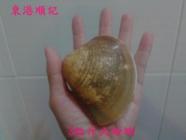 東港順記 超級鮮甜 大蛤蜊 烤肉必備食材 300*4台斤