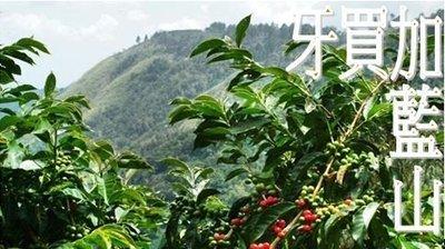 ~嚘呵咖啡~ 咖啡豆的DNA代表廠商-牙買加藍山(半磅)