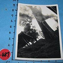 阿里山神木,,古董,黑白老照片,相片