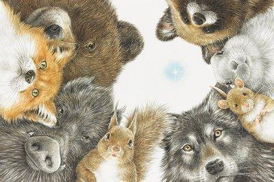 日本進口拼圖 動物工筆繪本 狐狸 兔子 山豬 狼 熊 下川原由美 - 尋找星星 1000片拼圖 1000-056