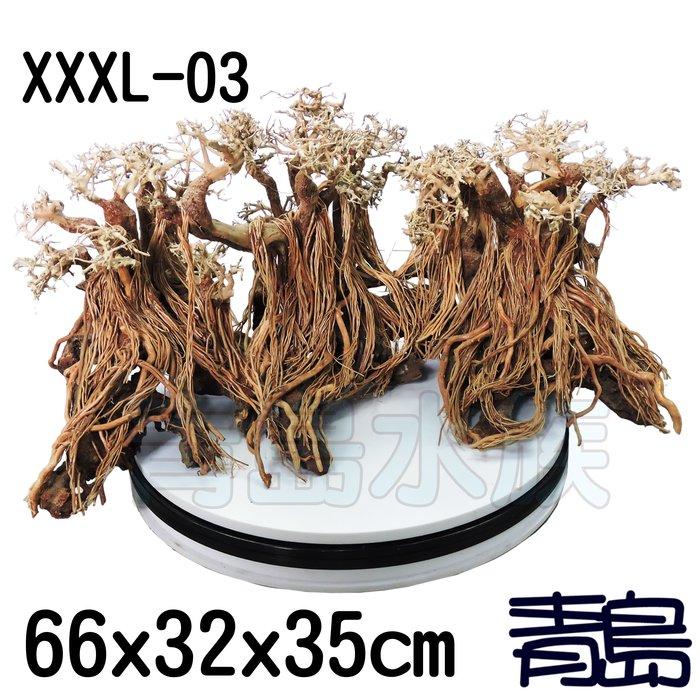 五1↓↓PN。。。青島水族。。。XXXL-03巴西沉木 巴西木 盆景樹 造景 造型神木樹 乾燥樹==66*32*35cm