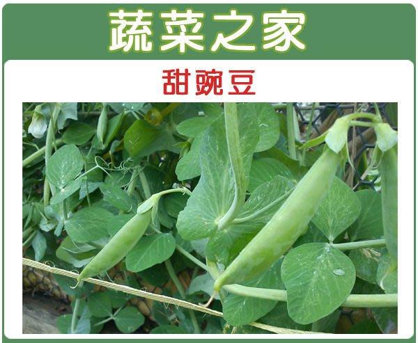 【蔬菜之家】E03.甜碗豆種子100顆(嫩豆.豆莢翠甜.蔬菜種子)