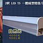 T5 LED 2呎 2尺 燈管 層板燈,  自然白 4000K...