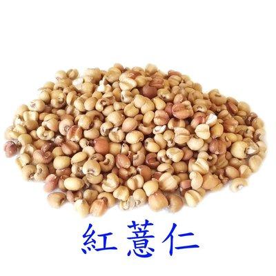 紅薏仁(無殼)-600克/零嘴大份量/適合鸚鵡、倉鼠、蜜袋鼯、黃金鼠/倉鼠零食/倉鼠飼料/鸚鵡飼料/鳥飼料