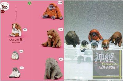 【神經玩具】現貨 T-ARTS 扭蛋 ZOO休眠動物園 第3彈 一套6種 熊貓之穴 轉蛋 非戽斗動物園