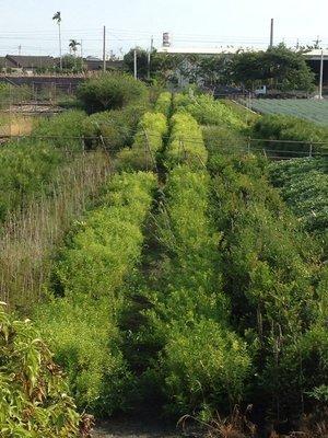 《榮恩園藝》各類苗木、草皮出售與種植,圍籬、溫室、網室、防草網等施工,整園苗木規劃代工,歡迎選購