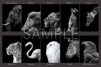 日本正版拼圖 黑白 動物圖鑑 老虎 貓頭鷹 獅子 大象 長頸鹿 斑馬 狐獴 1000片絕版拼圖,10-792