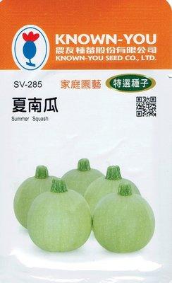 夏南瓜Summer Squash (sv-285) 白綠球狀 【蔬果種子】農友種苗特選種子 每包約10粒