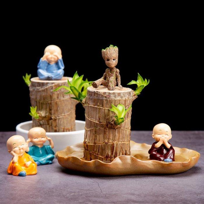 免運-巴西木幸運木盆栽水養樹樁水培植物室內桌面好看水養植物小盆栽(尺寸不同價格不同請詢價)