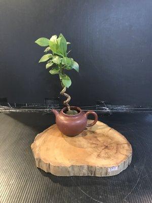 【 檜人檜語 】重油黃檜聞香 花枱 茶具原木座g