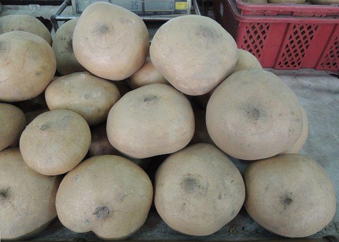 【蔬菜種子】台丸豆薯~~塊根丸球型,外皮微黃白色,肉質白,甜脆,水份含量特多。