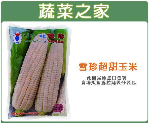 【蔬菜之家】G85.雪珍超甜玉米(純白色)種子20顆(果皮薄嫩,口感脆甜,有微微奶香.蔬菜種子)