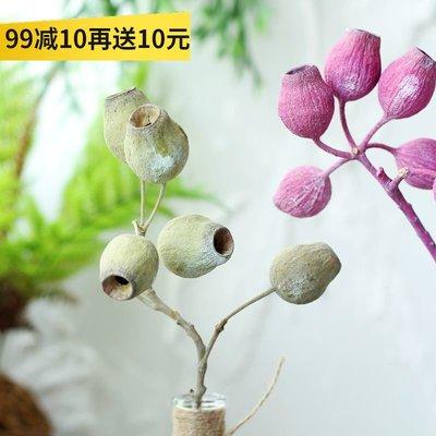 千禧禧居~【山樹】豌豆果 進口天然花束花材藝術干花干樹枝拍攝道具干花