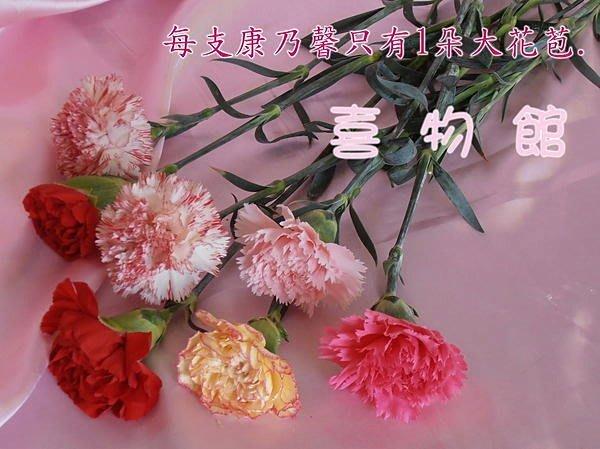 裸裝大康 康乃馨批發 母親節 禮物 單隻 單支康乃馨花束 母親節花束  4/15前訂購完成