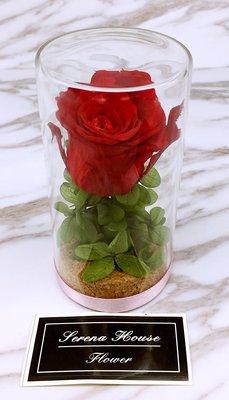 ~Serena House~不凋花永生花 美女與野獸 聖誕節禮物 交換禮物 紅玫瑰綠繡球不凋花玻璃罩 婚禮小禮 生日禮物