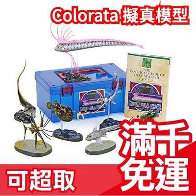 免運日本 Colorata 深海魚立體圖鑑 魚類愛好 地震魚擬真模型組 盒玩 考古生物科學 兒童節禮物❤JP Plus+