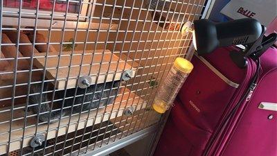 鸚鵡 蜜袋鼯 鳥類 刺蝟 兔貂 小動物廣口陶瓷保溫燈 寵物用保暖加熱燈 廣口萬向保暖燈 聚熱夾燈(不含燈泡)每件290元