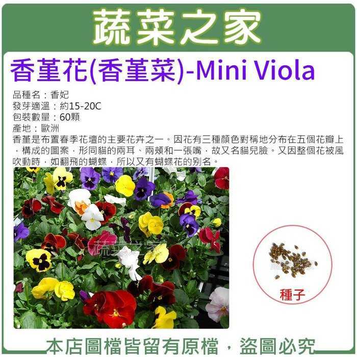 【蔬菜之家】H45.香堇花種子60顆(是布置春季花壇的主要花卉之一.花卉種子)