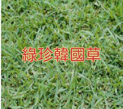 綠珍韓國草種子 [滿790免運費]100公克/包 綠珍韓國草籽(闊葉)