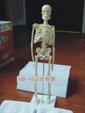 【奇滿來】A款45cm 高級人體骨骼 模型 美術 藝用 醫學 標準 骨骼 骨架 教學模型 ARCC