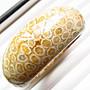18.72圍珊瑚玉手環超稀有億萬年的海底化石超美油亮天然菊花石菊花玉手鐲玉鐲鐲子花型珠寶玉石首飾飾品有機寶石